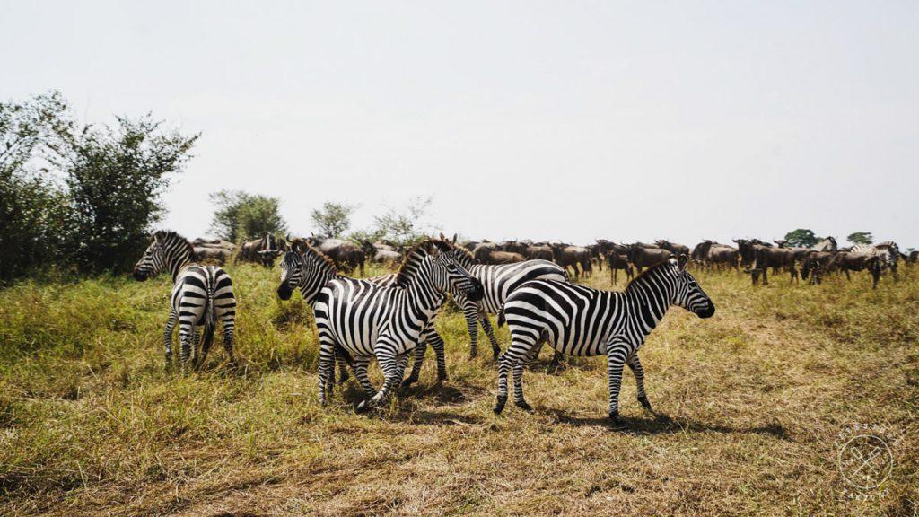 How to Book a Safari in Kenya