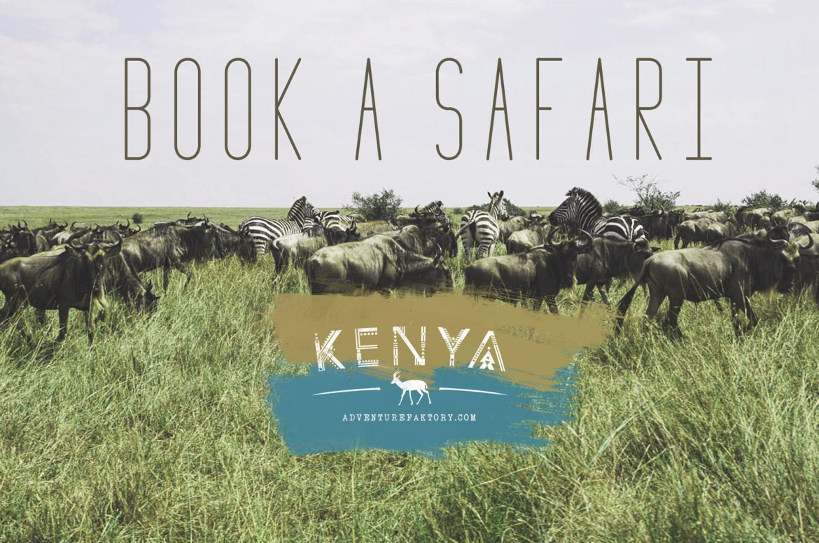 How to Book a Safari in Kenya