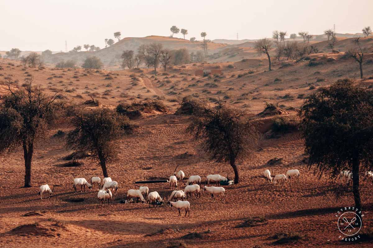 Ritz-Carlton Al Wadi Ras Al Khaimah