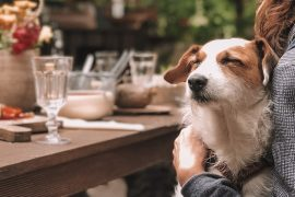 Dog-Friendly Terrasses in Montreal