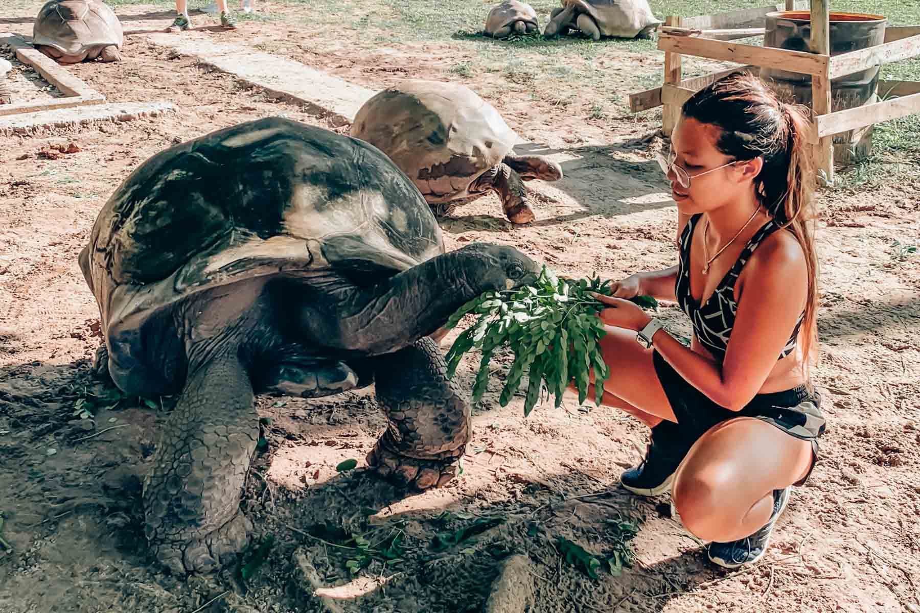 Turtle feeding in Seychelles